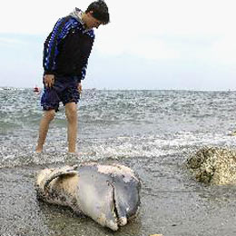 Another Dead Dolphin on Bulgarian Shore