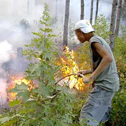 Fire Engulfs Pine Forest at Bulgaria's Seaside