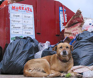 Bulgaria: Bulgarian Capital Home to 11,124 Stray Dogs