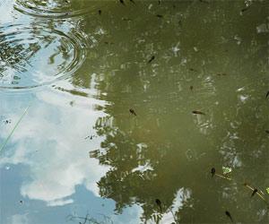 Bulgaria: Miraculous Healing at Slug Lake