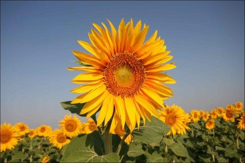 Bulgaria Set to Welcome Organic Farming World Experts: Bulgaria Set to Welcome Organic Farming World Experts