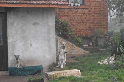 Owner of Child Killer Dogs Set up Illegal Shelter: Owner of Child Killer Bulgaria Village Dogs Set up Illegal Shelter