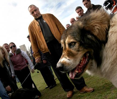 Bulgaria: PM Borisov: Politicians Should Be Like Bulgarian Shepherd Dog