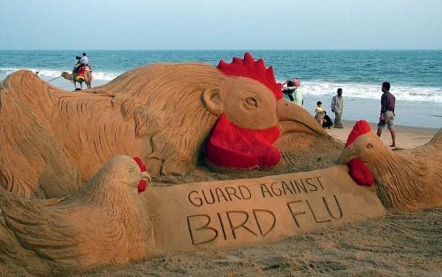Dead Bird Found near Bulgaria's Varna Positive for Avian Flu: Dead Bird Found near Bulgaria's Varna Positive for Avian Flu