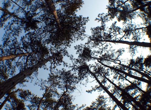 Bulgaria: Bulgaria Govt Set to Annul Illegal Land Swaps, Fight 'Lumber Mafia'