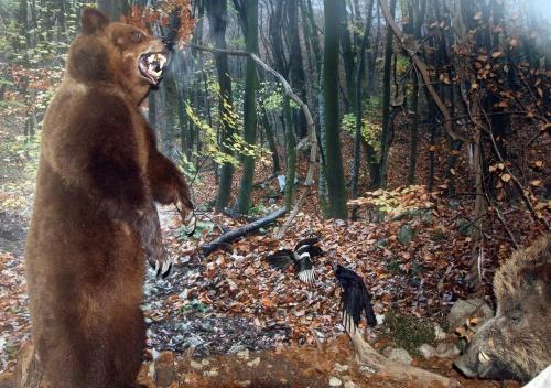 Bulgaria: Killer Bear Hunted Down in Southern Bulgaria
