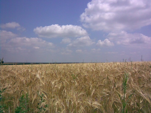 Bulgaria: Israel Wants to Import Grain from Bulgaria