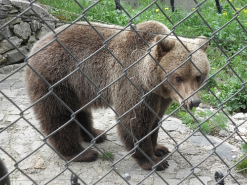 Bulgaria: Bulgarian Govt Allows Bear Hunt after Latest Killer Attack