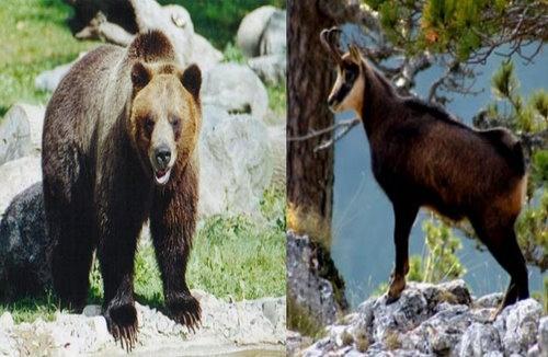 Bulgaria: Bulgarian MPs Adopt Dubious Law on Killer Bears, 'Killer Goats'