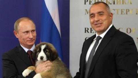 Bulgaria: Buffy - Putin's Bulgarian Shepherd Puppy
