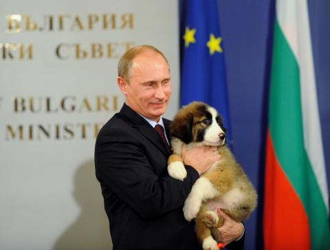 Vladimir Putin Dog Buffy Putin: Bulgarian Puppy...