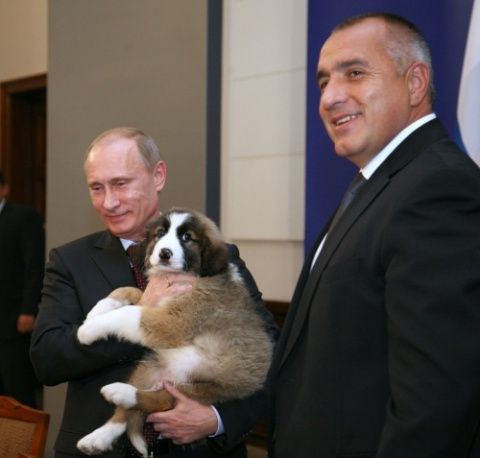 Putin Cute Bulgarian Puppy Uses My House As Wc Novinite Com Sofia News Agency