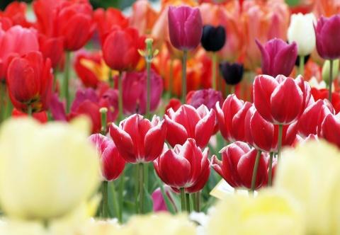 Bulgaria: First Bulgarian Gardener at Prestigious UK Flower Show