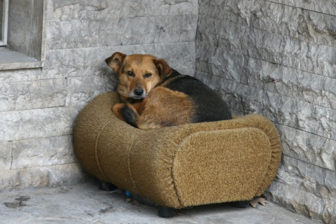 Bulgaria: Bulgaria's Sofia to Try Getting Rid of Stray Dogs by 2014