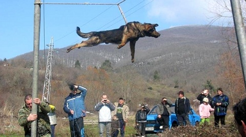 Bulgaria: Bulgarian PM Condemns Barbaric 'Dog Spinning' Ritual