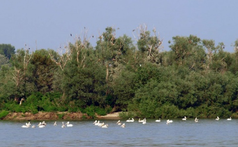 Bulgaria: Bulgaria Issues Danube Navigation Warning, River Level Critical