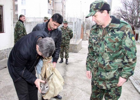 Bulgaria: Bulgarian Sodliers Rescue Wounded Doe