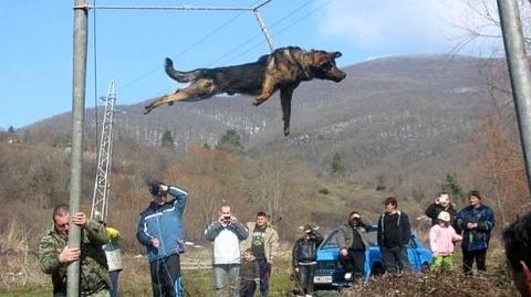 Bulgaria: Bulgaria Softens 'Barbaric' Dog Spinning Ritual
