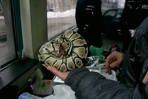 Bulgaria: Bulgarian Attempts to Smuggle Reptiles Hidden in Bus