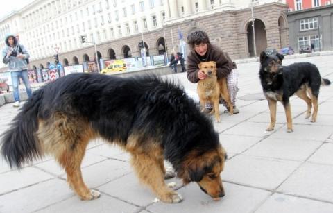 Πλήθος αδέσποτων σκύλων στους δρόμους της Σόφιας...