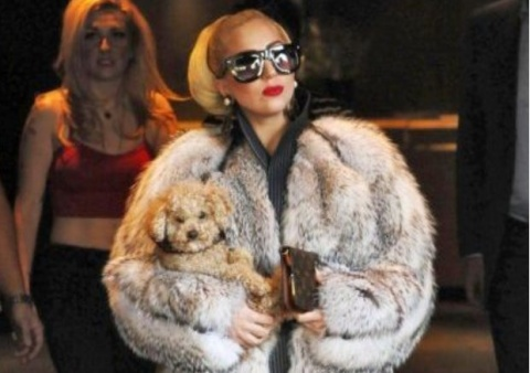 *Lady Gaga's Fur Coat Shocks Bulgarian Capital: *Lady Gaga's Fur Coat Shocks Bulgarian Capital