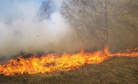 Bulgaria: Bulgaria Tames Wildfire along Border with Macedonia