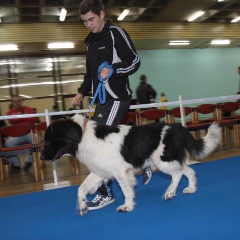 Bulgaria: Bulgarian Shepherd Dog of PM Borisov Declared World Champion