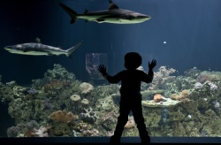 Bulgaria: Bulgaria's Burgas May Build Oceanarium