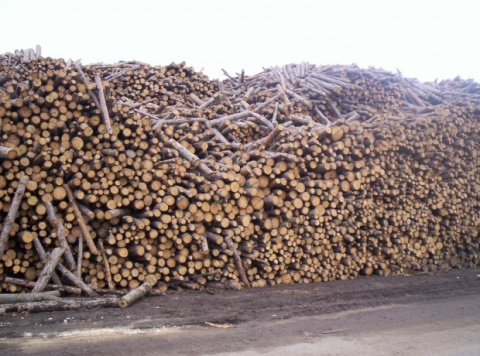 Bulgaria: EC May Fine Bulgaria over Failure to Stop Use of Wood for Home Heating