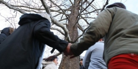 Bulgaria: Protesters Stop Felling of 200-Year-Old Tree in Sofia