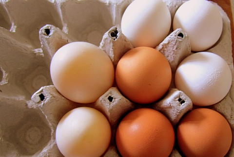Bulgaria: Turkey Lifts Ban on Imports of Bulgarian Eggs, Dairy Products