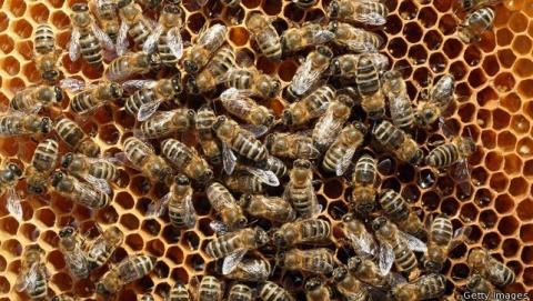 Bulgaria: EU Bans Bee-Harming Pesticides