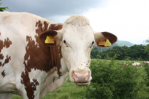 Bulgaria: Eurostat Highlights Inefficiencies in Bulgarian, Romanian Dairy Farms