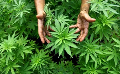 Bulgaria: Romania Legalizes Medical Marijuana