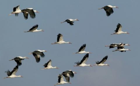Bulgaria: Bulgaria Sets Up New Protected Area on Northern Black Sea Coast