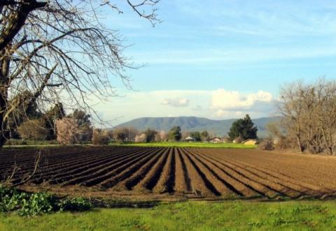 Romania to Lift Agricultural Land Sale Ban - Novinite com