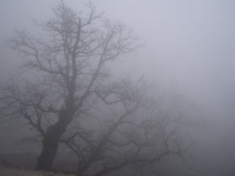 January Brings Temperature Records, Dense Fog: January Brings Temperature Records, Dense Fog