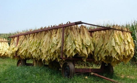 Bulgaria: Bulgaria's Tobacco Growers Set for Protest