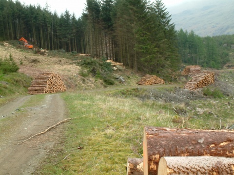 Bulgaria: Bulgaria, Indonesia to Cooperate in Forest Protection – Deputy Min