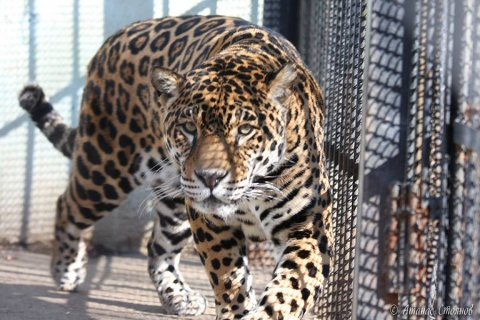 Bulgaria: Lovech Prosecution to Look Into Alonso The Jaguar Murder