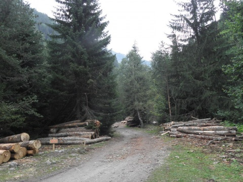 Bulgaria: EU Commission Tells Bulgaria to Scrap Woodland Swap Deals