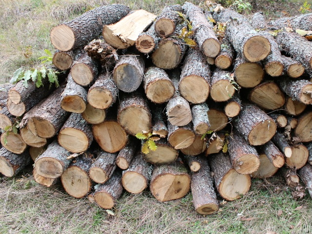 Bulgaria: Moratorium on Timber Exports in Bulgaria Remains in Place