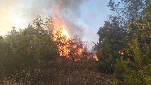 Bulgaria: Wildfires in Bulgaria Increase in Number and Area Affected