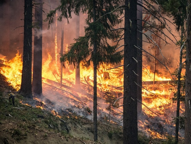 Bulgaria: Almost 40 000 were Evacuated Due to Enormous Forest Fire in Canada