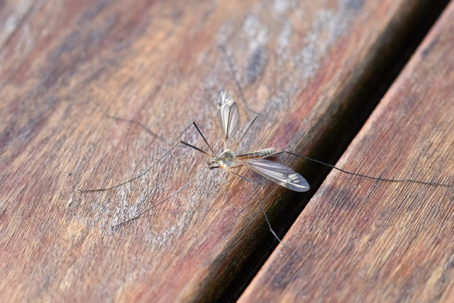 Bulgaria: West Nile Mosquito Fever Kills Two People in Greece