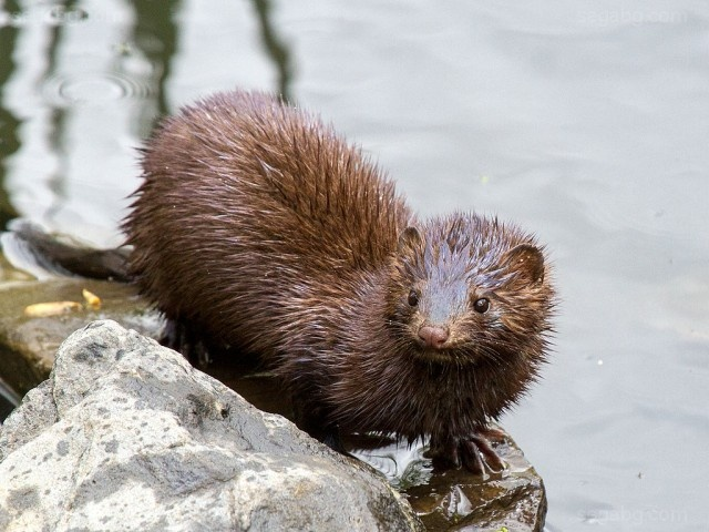 Bulgaria: Environmentalists Demand the Closure of a Mink Farm
