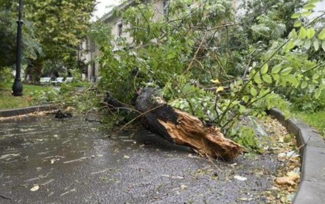 Bulgaria: Storm Caused Damage, Blocked Roads and Left Settlements without Electricity in Ruse