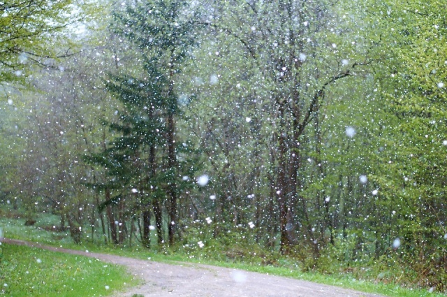 Bulgaria: NIMH: Rains to Continue, Transforming into Snow in Some Areas of Western Bulgaria