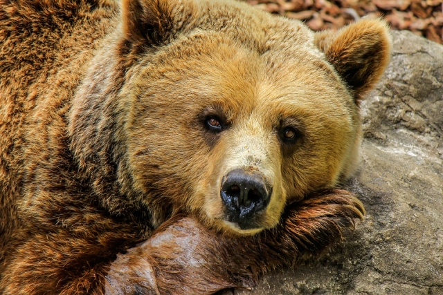Bulgaria: 3-Year Old Bear Was Shot Near the Village of Enina