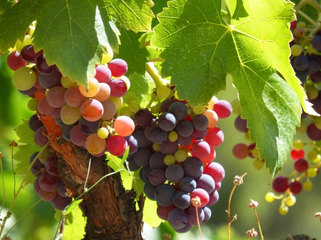 Bulgaria: Viet Nam News: Bulgarian Wines to be Presented in Hà Nội